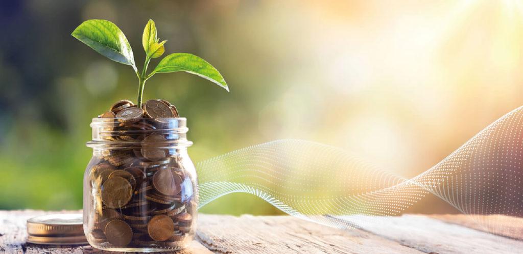 Seedling growing out of money jar